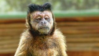 合理主義の猿真似がブラック企業を生む